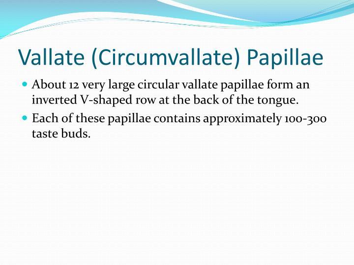 Vallate (Circumvallate) Papillae