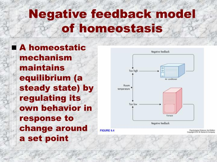 Negative feedback model of homeostasis