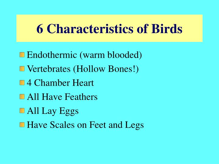 6 Characteristics of Birds