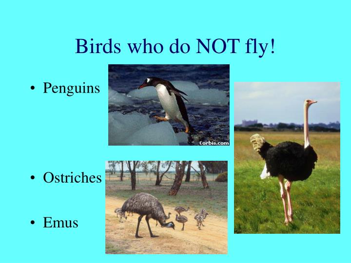 Birds who do NOT fly!