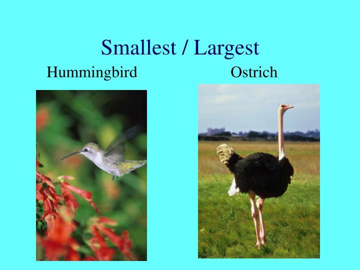 Smallest / Largest