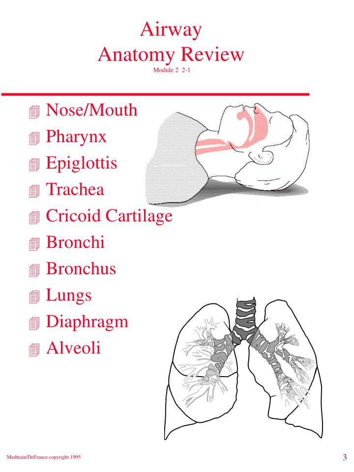 Airway anatomy review module 2 2 1