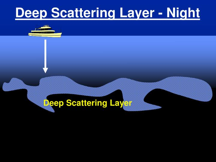 Deep Scattering Layer - Night