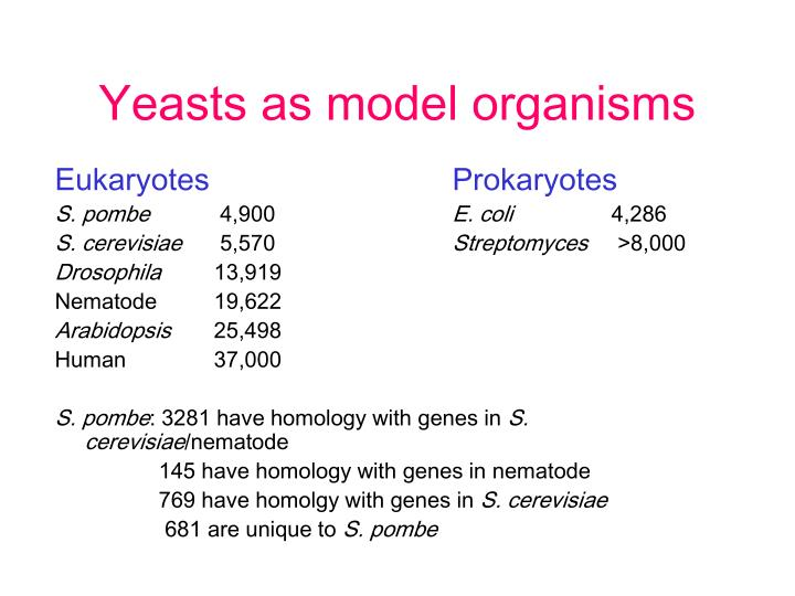 Yeasts as model organisms
