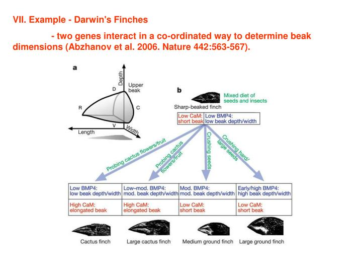 VII. Example - Darwin's Finches