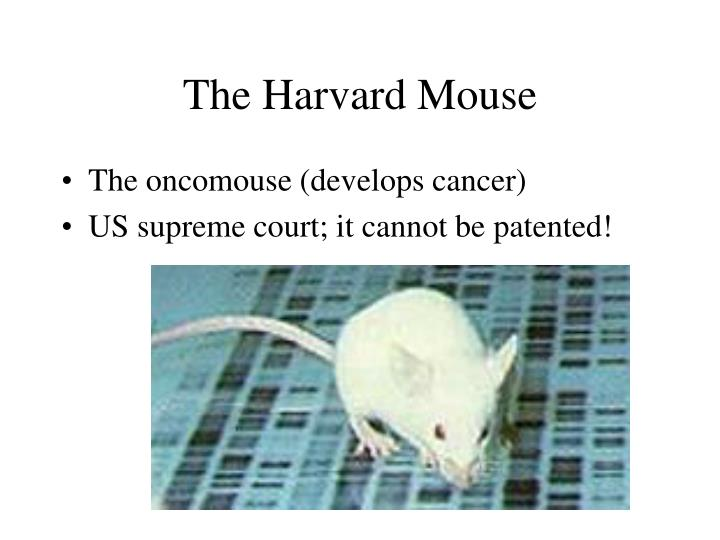 The Harvard Mouse
