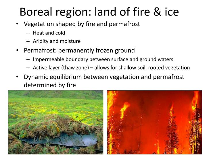 Boreal region: land of fire & ice