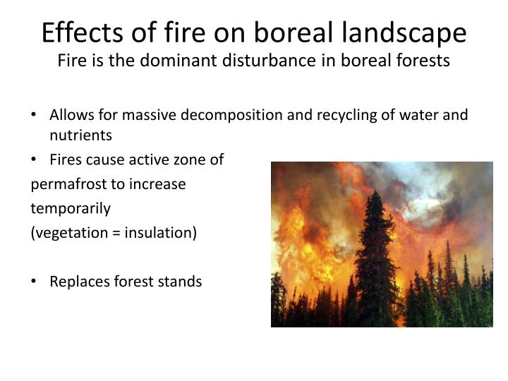 Effects of fire on boreal landscape