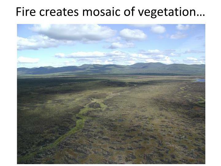 Fire creates mosaic of vegetation…