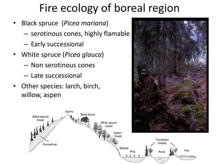 Fire ecology of boreal region
