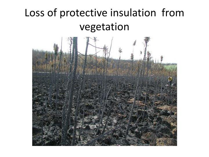 Loss of protective insulation  from vegetation