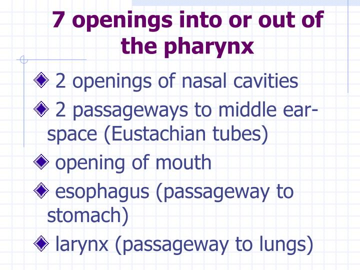 7 openings into or out of the pharynx