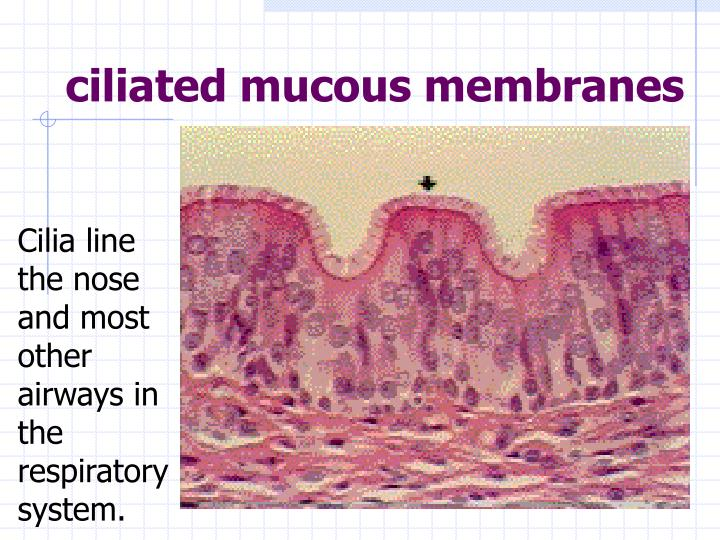 ciliated mucous membranes