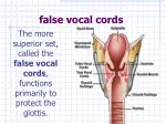false vocal cords