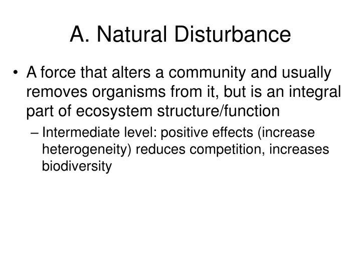 A. Natural Disturbance
