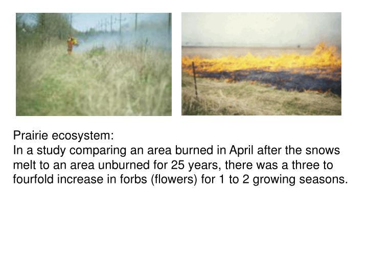 Prairie ecosystem: