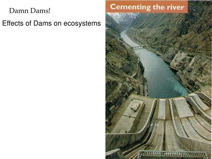 Damn Dams!