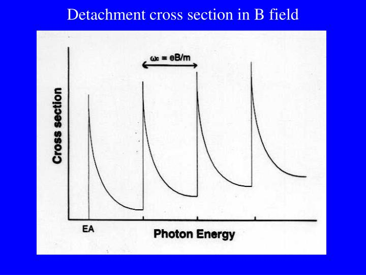 Detachment cross section in B field