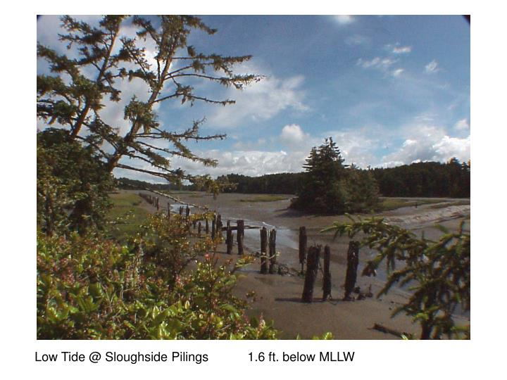 Low Tide @ Sloughside Pilings           1.6 ft. below MLLW