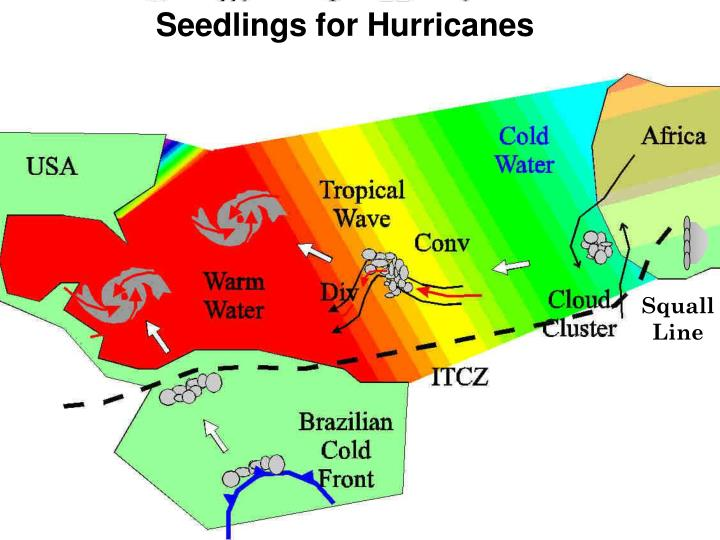 Seedlings for Hurricanes