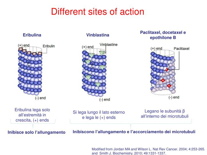 Different sites of action