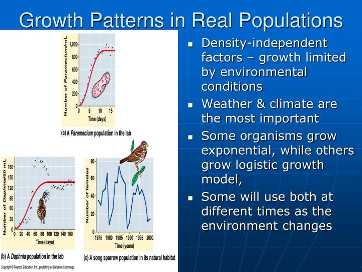 Growth Patterns in Real Populations