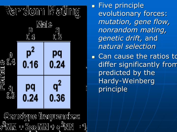 Five principle evolutionary forces: