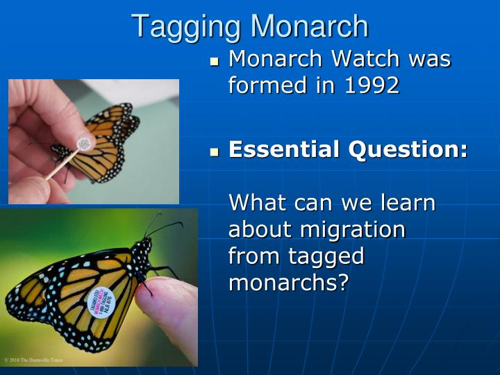 Tagging Monarch