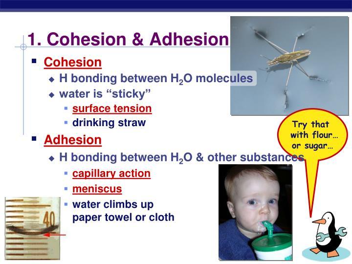 1. Cohesion & Adhesion