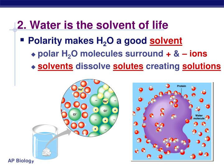 2. Water is the solvent of life