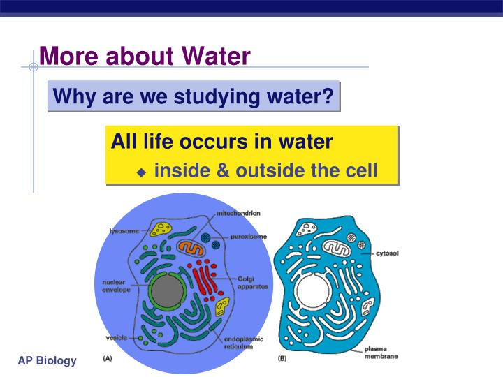 More about Water
