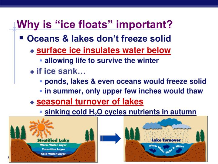 "Why is ""ice floats"" important?"