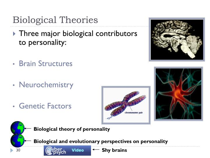 an introduction to the biological theories of personality Some of these theories attempt to tackle a specific area of personality while others attempt to explain personality much more broadly biological theories biological approaches suggest that genetics are responsible for personality in the classic nature versus nurture debate, the biological theories of personality side with nature.