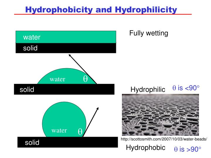Hydrophobicity and Hydrophilicity