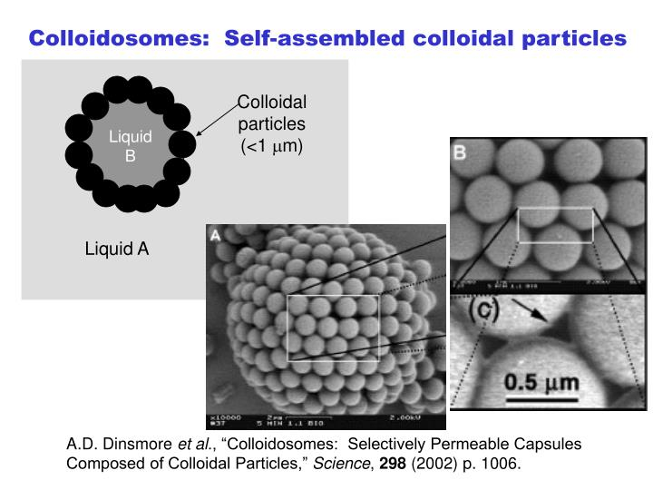 Colloidosomes:  Self-assembled colloidal particles
