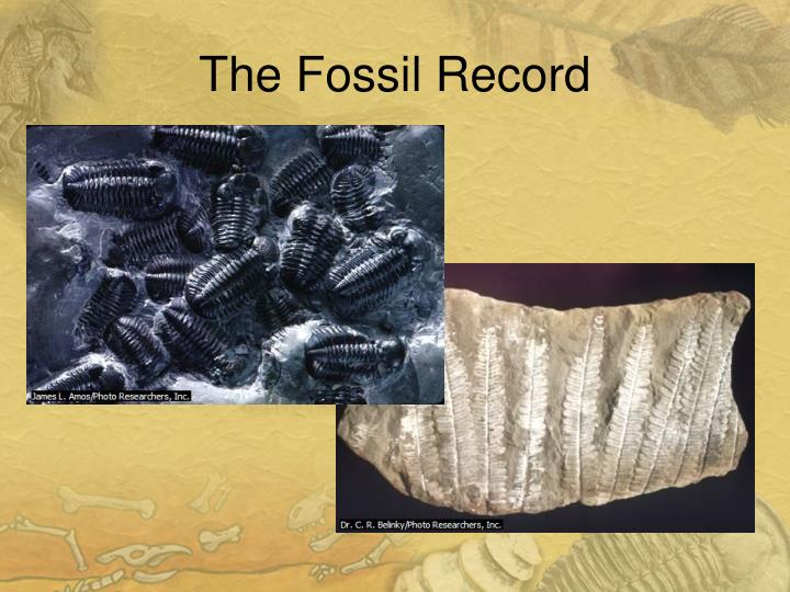 Hookup the fossil record worksheet key