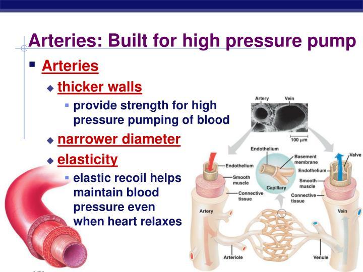 Arteries: Built for high pressure pump