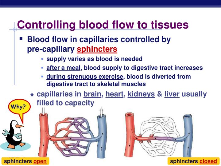 Controlling blood flow to tissues