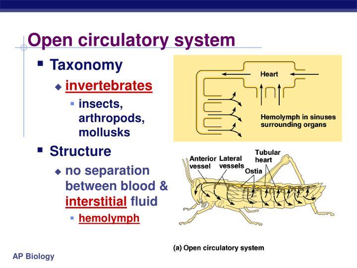 Open circulatory system