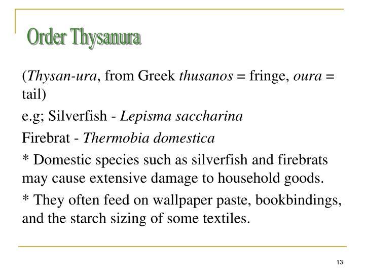 Order Thysanura