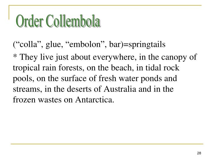 Order Collembola