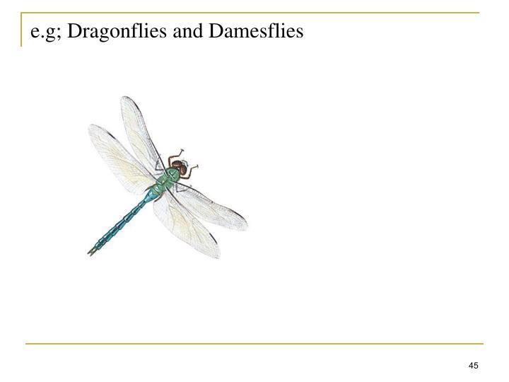 e.g; Dragonflies and Damesflies
