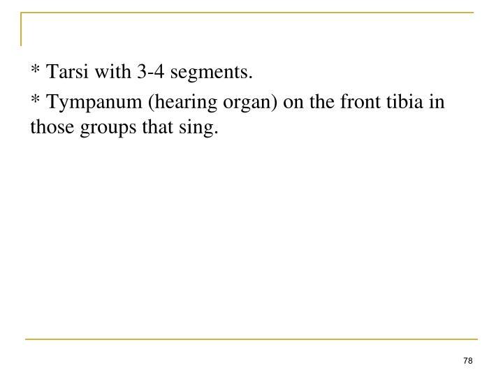 * Tarsi with 3-4 segments.
