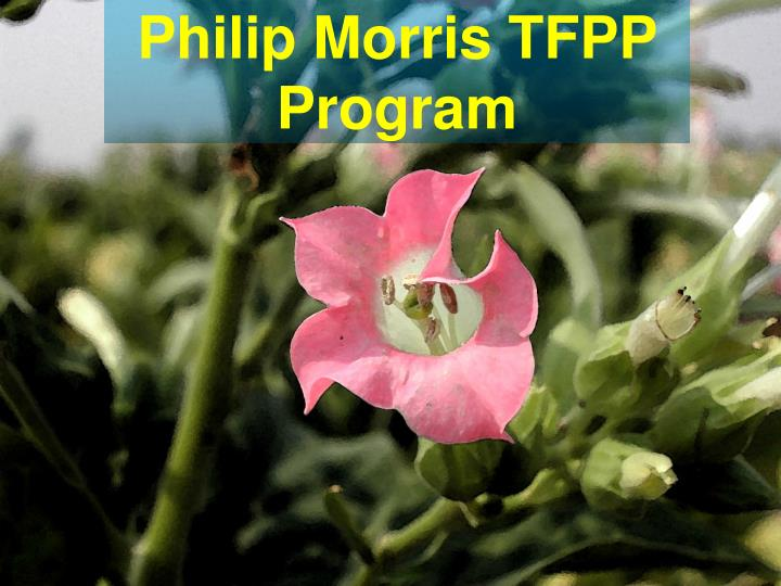 Philip morris tfpp program