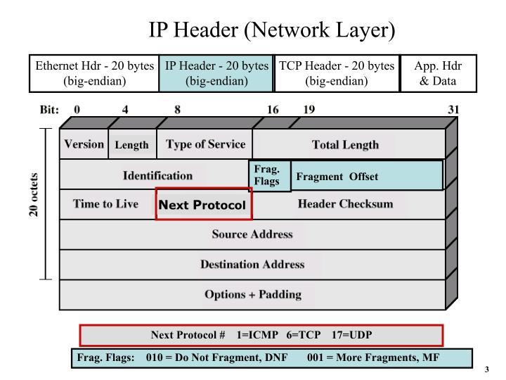 IP Header (Network Layer)