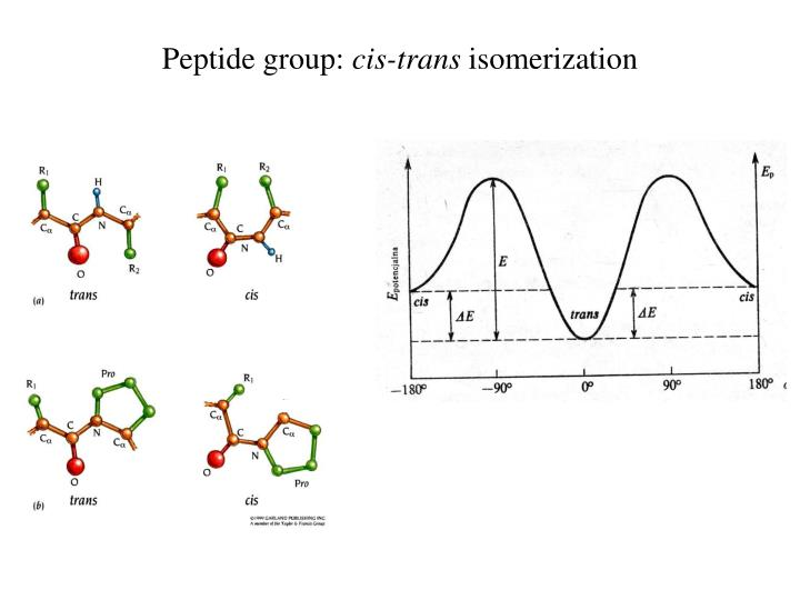 Peptide group: