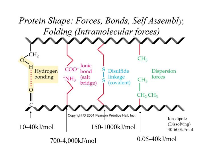 Protein Shape: Forces, Bonds, Self Assembly,
