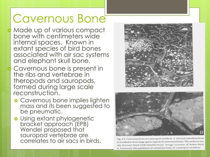Cavernous Bone