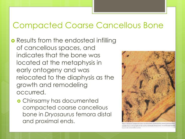 Compacted Coarse Cancellous Bone