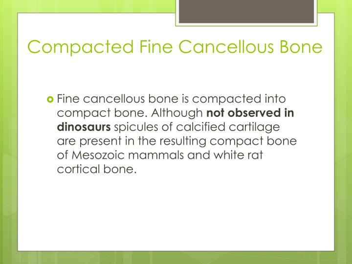 Compacted Fine Cancellous Bone